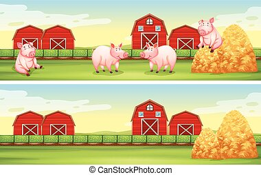Scenes with pigs on the farm