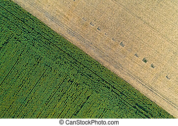 Scenic agricultural fields. Aerial view.