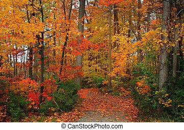 Scenic Autumn - Scenic autumn walk way in michigan upper...