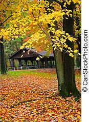 Scenic Autumn Tree