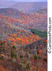 Scenic autumn valley