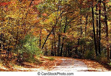 Scenic Autumn Walkway