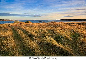 Scenic coastline of Newfoundland and Labrador