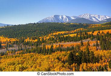 Scenic Colorado landscape - Colorful Aspens in rocky...