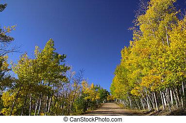 Scenic drive through Aspens