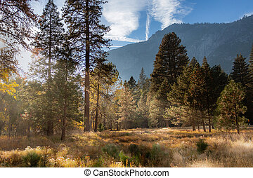 Scenic fall colors in Yosemite Valley with a meadow and trees