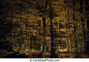Scenic Fall Forest at Night