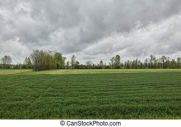 scenic field with cloudy sky