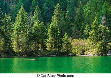 Scenic Forest Lake
