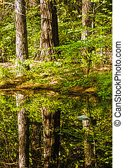 Scenic Forest Reflections in still pond