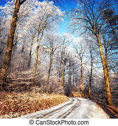 Scenic forest road in winter, with snow and hoarfrost on the...