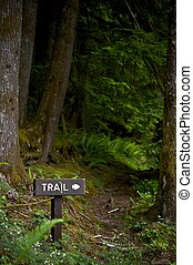 Scenic Forest Trail - Forest Trail Wooden Arrow Sign. Hiking...