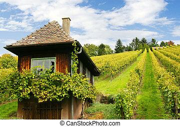 scenic grapevines