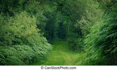 Scenic Grassy Path Through The Trees - Woodland scene with...