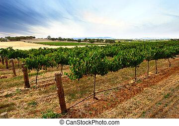Green Vines