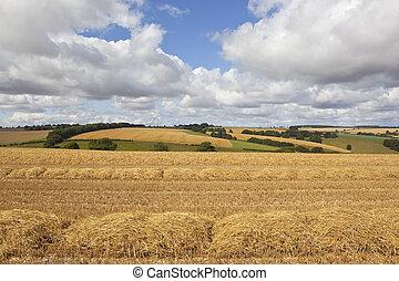 scenic harvest landscape