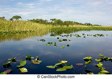 Florida Everglades - Scenic landscape Florida Everglades