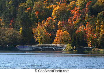 Allegheny national forest - Scenic Landscape In Allegheny...