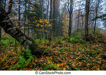 Scenic landscape of forest in the fall
