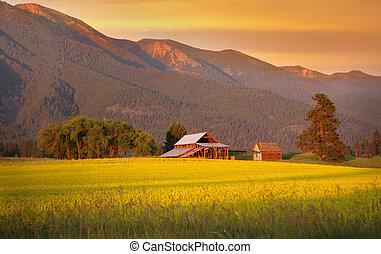 Scenic landscape - Rapeseed farm and barn in evening sun ...