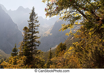 Scenic landscape view of a misty alpine valley