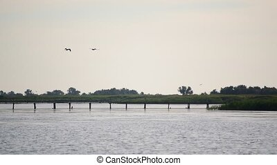Scenic landscape with two pelicans flying above water -...