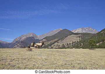 Scenic Lanscape and Elk Herd