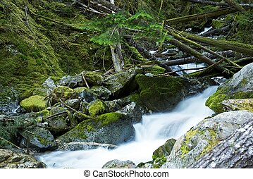Scenic Montana Mossy Creek. Montana, USA. Nature Photo...