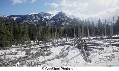 Picturesque rocky landscape of Tatras mountain range in early spring