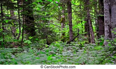 Scenic panorama of green forest thicket in summer - Sliding...