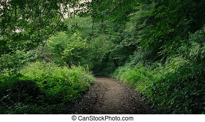 Scenic Path Through The Woods