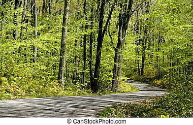 Scenic drive through green forest in spring time