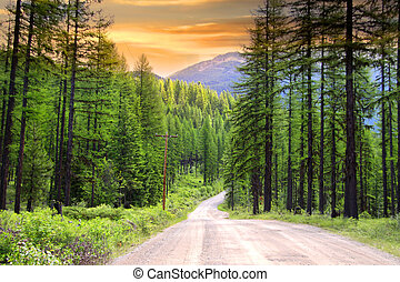 Scenic rural drive in Montana - Drive through pine woods in...