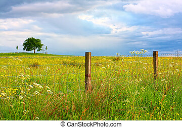 Scenic Scottish landscape with wildflowers