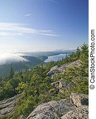 scenic shot of pine trees and mountain range