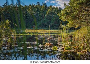 Scenic Summer Lake