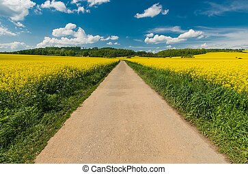 Scenic Summer Road Through the Yellow Flowering Rapeseed...