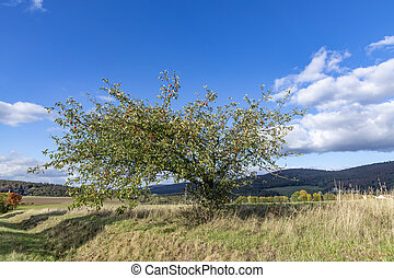 scenic Taunus landscape with apple tree in beautiful afternoon light