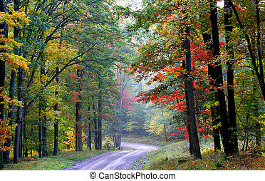 Scenic Trail - Scenic autumn landscape in Allegheny national...