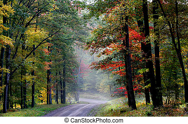 Scenic autumn landscape in Allegheny national forest