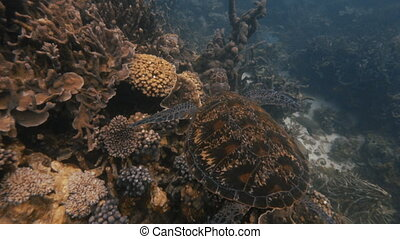 Scenic turtle underwater shot - A cinematic scenic shot of a...
