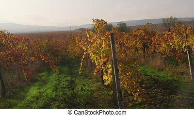 Scenic valley vineyards in fall near Inkerman pan shot