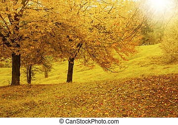 Scenic vibrant autumn countryside landscape in the warm fall sun light