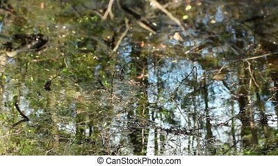 Scenic view forest in spring reflected in water - Scenic...