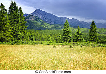Scenic view in Canadian Rockies