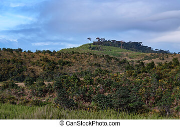 Scenic view in Horton Plains, Sri Lanka - Beautiful...