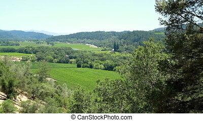 Scenic View Napa California - Scenic View Napa Trees...
