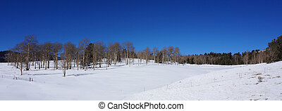 Scenic view of America forest in the winter