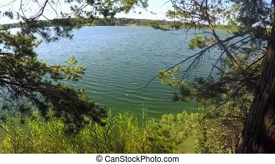 Scenic view of blue lake near trees and grass