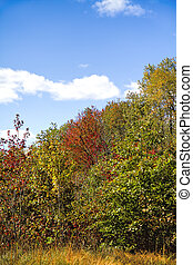 Scenic View of Foliage Changing on Trees Early Fall